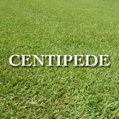 Centipede WEB
