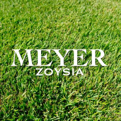 Meyer-WEB