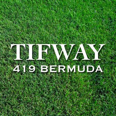 Tifway419-WEB