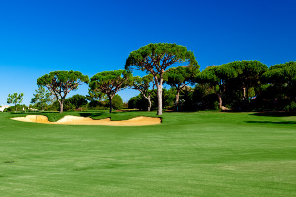 Beautiful landscape picture of a golf court with pine trees